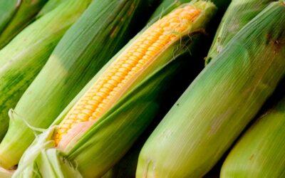 Platillos pinoleros a base de maíz