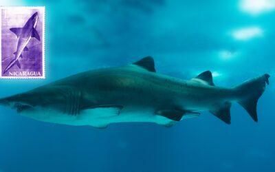 El Tiburón gigante que habita las aguas del Cocibolca